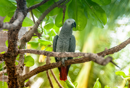 Exotic parrot in tropical forest. Maldives. Wild nature. Birdwatching