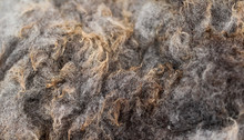 Close Up Of Shorn Sheeps Wool ...
