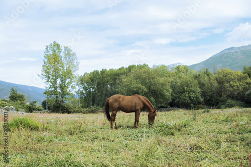 Minimalist scene of a chestnut horse grazing peacefully in the field in front of Poster