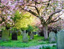 York, United Kingdom - 05/06/2018: A Graveyard Showing The Contrast Between Life And Death.