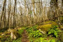 Appalachian Trail Leading To T...