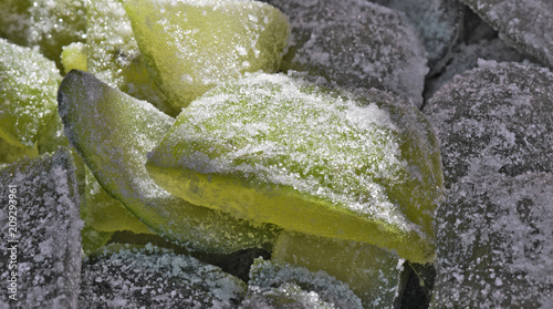 Closeup of crystallized citron portion Canvas Print
