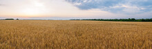 Yellow Field With Wheat Against The Sunset.