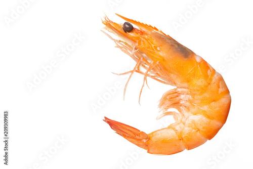 Valokuva  Shrimps. Prawns  on a White Background. Seafood