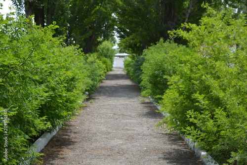 Foto op Canvas Weg in bos alley and concrete white curbs with beautiful bushes and green poplar trees