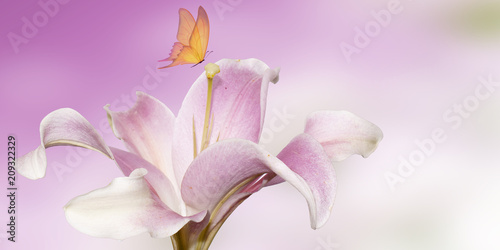Papiers peints Montagne pink lily with butterfly