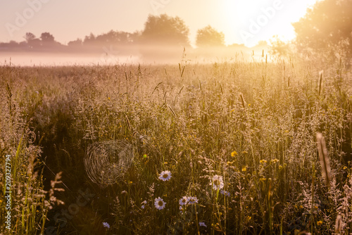 Foto op Aluminium Weide, Moeras Early morning in the meadow, spider webs and chamomile flowers in the dew, the mist spreads over the field.