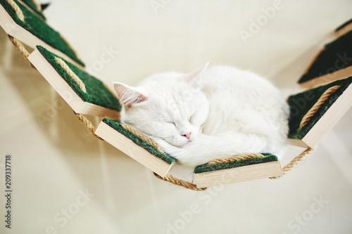 Fotografija cat with white wall background