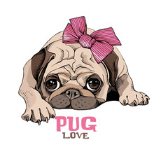 Pug Puppy With A Pink Bow. Vector Illustration.