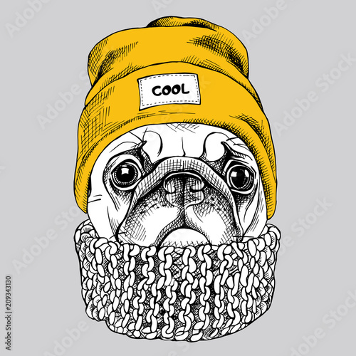 Portrait of Pug in a yellow Hipster hat and with knitted scarf. Vector  illustration. 599746e561c