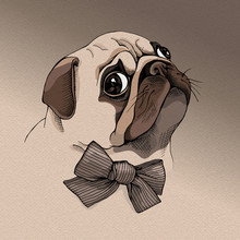 Portrait Of A Pug Puppy In Profile With A Bow. Vector Illustration.