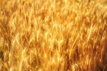 Yellow Grass, Texture