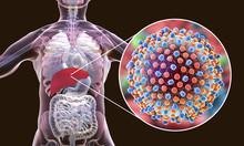 Hepatitis C Virus Infection Me...