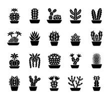 Cactuses. Desert Plants For Te...