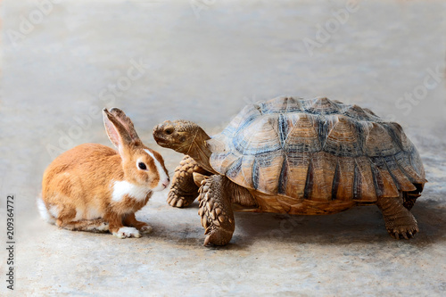 Poster Tortue rabbit and turtle.