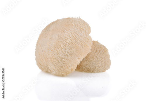 Fotografía Lion mane mushroom isolated on white background.