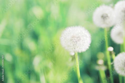 Fotografía  Summer, spring natural floral background