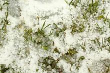 Hail Lying On The Green Grass....