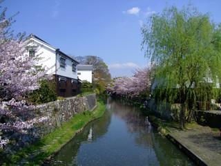 Fototapeta na wymiar sakura landscape oumihachiman shiga japan