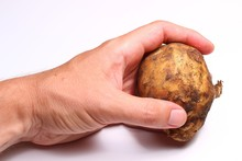 The Hand Holds Potatoes On A White Background