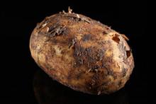 Dirty Potato On A Black Background