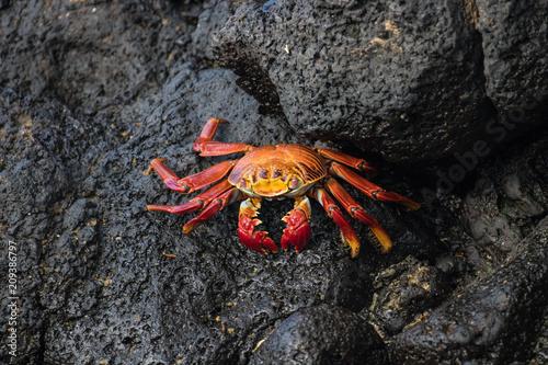 Fotografie, Obraz  Galapagos Santa Cruz Island, Equador