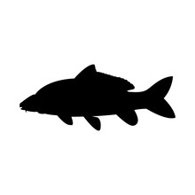 Vector Image Of Fish Carp Silh...