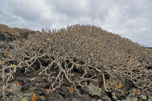 Fotobehang Grijs Lanzarote, Vulkangestein, Pflanzen