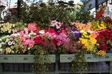 Pretty Flowers At A Market In Sydney, Australia