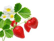 Ripe Fresh Strawberries On White