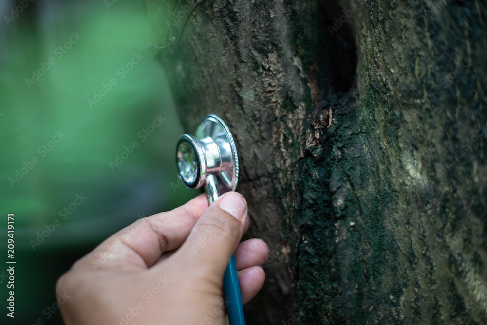 Checking health tree by stethoscope