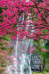 Fototapeta Wodospad Cherry tree waterfall