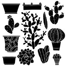 Cacti, Houseplants, Flowerpots...