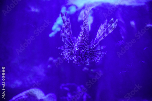 Spoed Foto op Canvas Violet Beautiful Sea World. Sea fish at depth. Underwater world with corals and tropical fish. Underwater scene. Underwater world. Underwater life landscape.