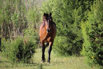 cheval dans la nature