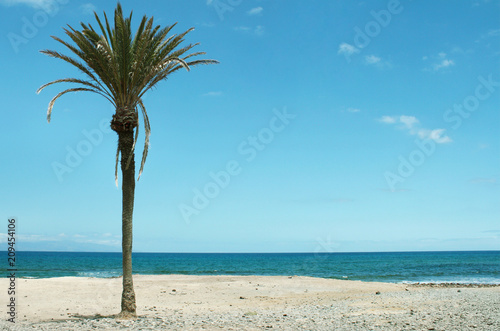 Beautiful seascape with an isolated palm tree