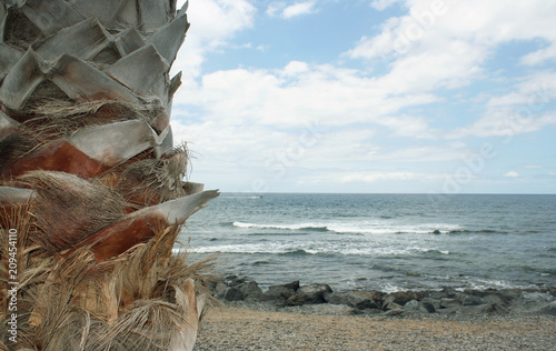 Beautiful seascape with detail of a palm tree in the foreground