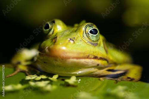 Tuinposter Kikker Frog in the sun