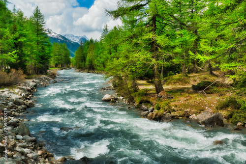 Foto op Plexiglas Rivier river among the trees in Aosta Valley
