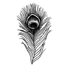 Peacock Feather Sketch. Hand Drawn Vector Illustration.