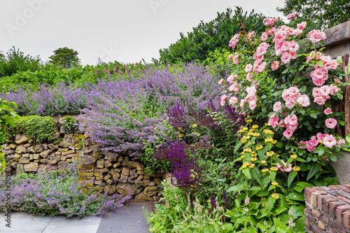 Aluminium Prints Dark grey Colorful purple pink garden, with rose and salvia