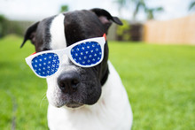 Cute Black And White Dog Weari...