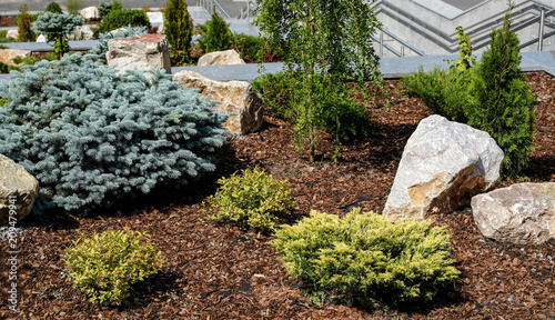Foto op Plexiglas Diepbruine Landscape design. Bushes, rocks. Dwarf spruce. Flowers. Decorative element. Interior decoration.