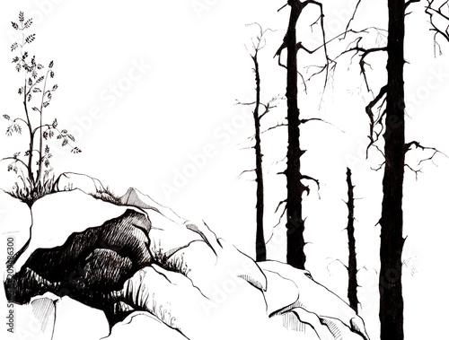 Góry Skaliste. Młode drzewo jarzębiny. Trawa wyskakuje spod skał. Czarne sylwetki wiekowych pni drzew modrzewia. Ręcznie rysowane liniowy ilustracja na papierze. Szkicuj atramentem.