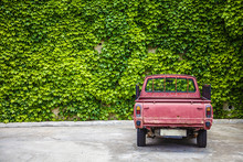 Enormous Wall Adorned With Green Vine Crawling Leaves. An Old Red Truck Was Parked Facing The Gigantic Fence, The Rustic Wine Colored Car Blends Well With The Scattered Greenery.