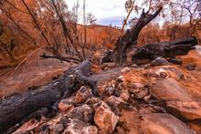 Large Oak Tree Destroyed By Fire Near Road