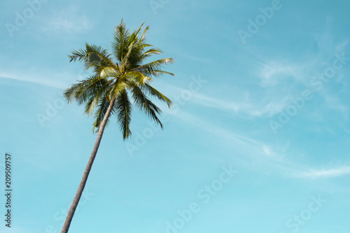 Poster Palmier Green palm tree on blue sky background