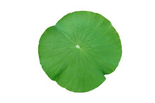 Lotus Leaf Isolated On White B...