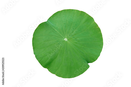 Valokuvatapetti Lotus leaf isolated on white background with clipping path.