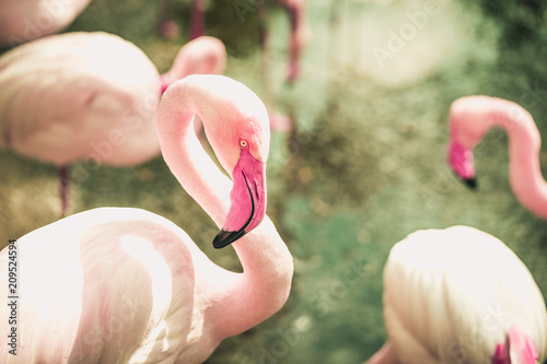 Photo  Flamingo Stance